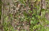 實拍十張狙擊手罕見隱藏照,與自然融為一體,站他面前都辨別不出