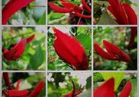 此花叫做什麼花?