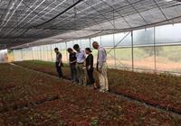 大理試驗站科技人員到彌渡縣進行花卉苗木產業調研