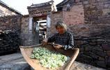河南有個村莊全村只有5戶人家,全部是老人,平均年齡在70歲以上