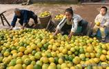 四川這個縣是被譽為成渝之心,還是人口第一大縣,前途不可限量