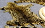 動物世界:走私的動物珍寶