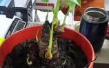 撿來的小綠植,陪他慢慢長大(存圖)