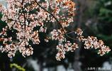 春天的滎陽:踏春好去處,被鮮花淹沒的地方