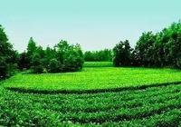 請告訴所有人,這裡是湄潭茶海生態園!