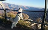 這隻叫做甘道夫的旅行貓看過的世界,可能比你還多