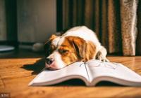你為什麼要讀書?讀什麼書?怎麼讀書?這裡有最真誠的回覆