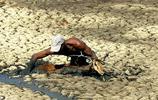 羚羊被困深泥中 工作人員拼死營救獲贊