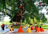 菩提樹,廣西三江是否適合種植?