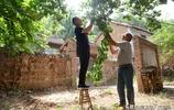 深山中,農民大哥發現山杏被偷摘,看他如何對待遊客
