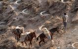四川農民牽著騾馬到陝西農村月賺18000元,看看他們乾的啥營生