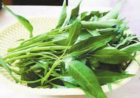 空心菜之王:中國名蔬博白蕹菜,曾在九十年代遠銷美國,賣到斷貨