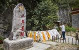 雲南有棵千年菩提樹,一夜之間長出一隻佛手,傳說有招財的神力