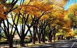 真實風景:美國猶他州秋景