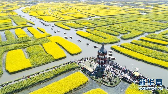 江蘇興化市千垛菜花景區油菜花次第盛開,吸引眾多遊客賞花遊玩