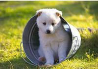 如果你家的狗狗學東西很慢,那可能是因為它的智商不夠高!