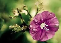 人生感悟正能量語句,觸碰心靈的句子