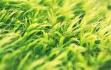 能帶來好心情的護眼綠色植被唯美高清手機壁紙