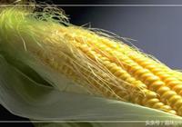 原來,玉米鬚有這麼多的用處?