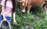 16歲的農村美女上山放牛,無意發現個黑乎乎傢伙,頓時樂壞了!