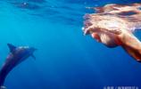 海中分娩,讓海豚接生