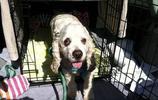 活了二十多年的壽星狗狗,因為得了老年痴呆就被主人狠心的趕出家