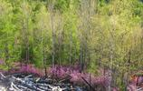 松林,距廣漢市區18公里,素有花果山之盛稱