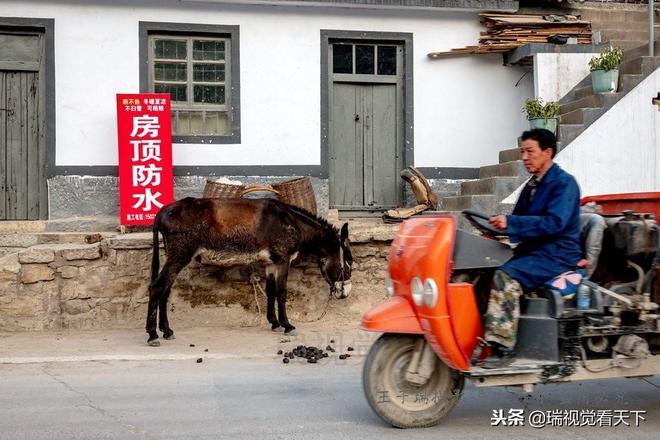 """河北邯鄲:涉縣""""毛驢之鄉""""家家養驢,騎在毛驢上發家致富!"""
