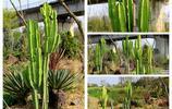 寧波植物園裡除了常見的植物,還有長在沙漠裡的仙人柱和小火車