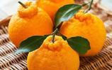 醜橘也是轉基因?20年老果農說實情,不知道你的醜橘就白吃了