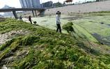 濟南成草原城市,河道被水草包圍,工人一天能撈上千斤