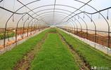 在昆明郊區種花種草的重慶人,一個月工錢2000多,比本地人工錢低