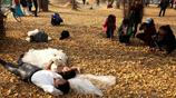 農村80後小夫妻來300年銀杏林拍結婚照,這是國內最大古銀杏叢群