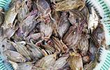8兩左右梭子蟹150元一斤 半斤左右石夾紅100元一斤 你選哪個