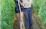 都市女孩第一次到農村田地裡體驗生活,這架勢樂壞了農村大爺
