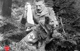 老照片,動物與戰爭,看一戰中那些被捲入戰爭的動物們