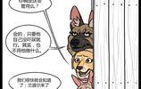 萌翻了:小奶貓與退役軍犬之《你這條大瘋狗!》,第24集