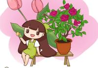 """紅掌也能開半年,打理""""五部曲"""",讓家裡常有紅花開"""