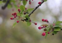 這是一份青島賞花最全攻略!哪兒賞海棠紫荊,哪裡看丁香花…