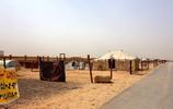 沙特人特別喜歡駱駝,一隻好駱駝價值上萬