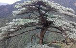 郴州遊記:莽山國家森林公園