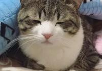 大愛萌寵控第1048:ins上一隻萌貓打瞌睡和睡醒後的對比