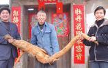 """七旬老人挖出酷似""""黃鼠狼""""稀罕物,長1米8重103斤,你看看是啥"""