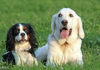 """如果你家狗狗有這""""6種行為"""",那麼恭喜你,它承認你這個主人!"""