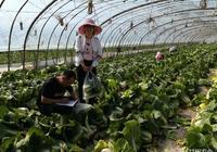 甘州區農產品質檢中心紮實開展農產品抽樣監測工作