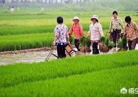 全家非農業戶口,吃國家工資的,在農村有大面積宅基地,大面積土地,該怎樣辦?