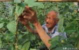 江蘇81歲農民誠實守信,5年來替不幸去世的兒子還清外債330萬元