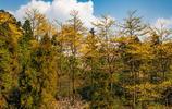 這個幽靜神祕的地方令人眼花繚亂,國家級自然保護區春日風景醉人