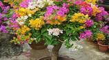 這6種招財花卉,堪稱''花卉之王'',能種上3種都是富貴之家