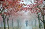 陰雨連綿秋意濃!巴南的楓葉紅了,國慶賞景正當時,約嗎?